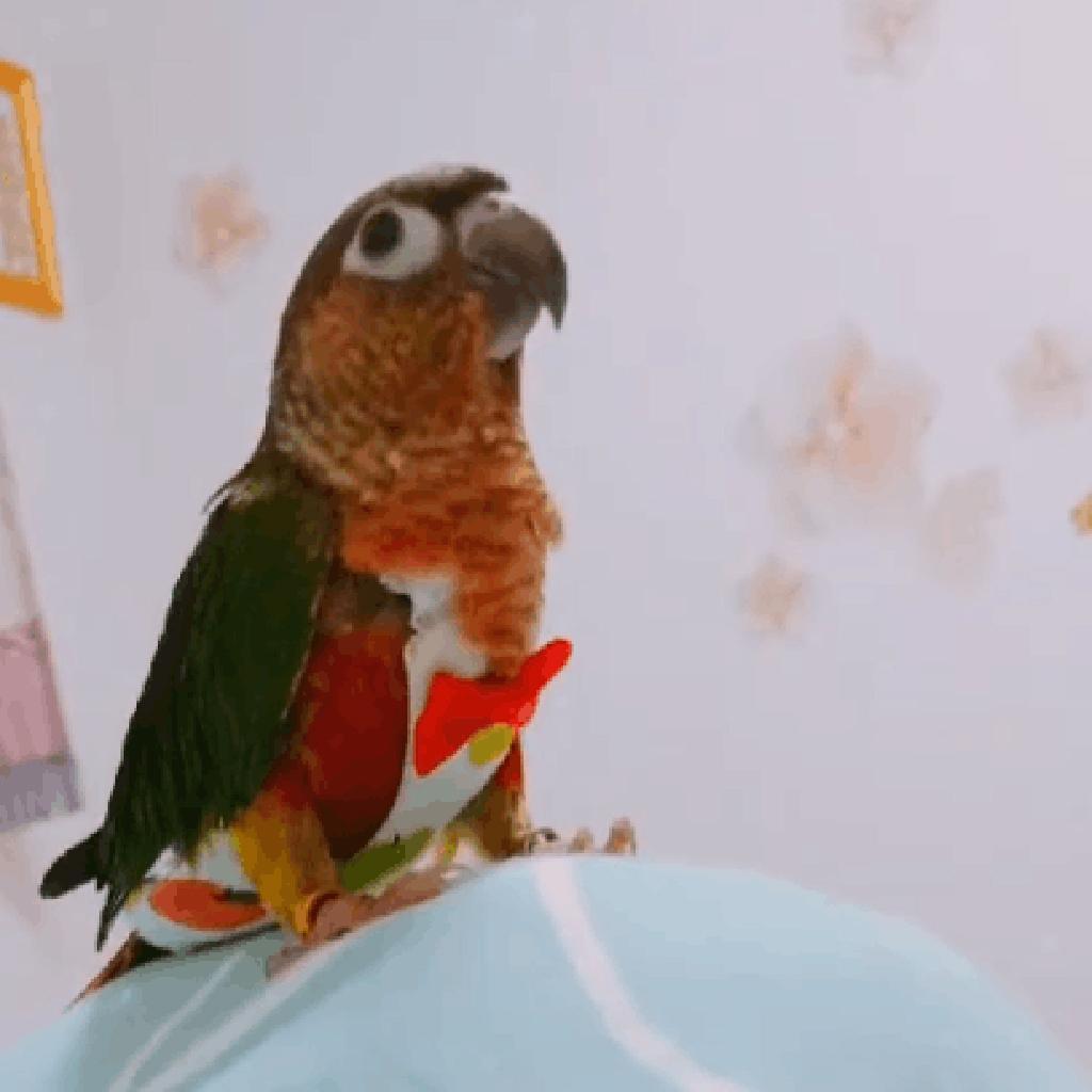 Piumino-di-tessuto-lavabile-pappagallo-fisiologico-pappagallo-pappagallo miniatura 5
