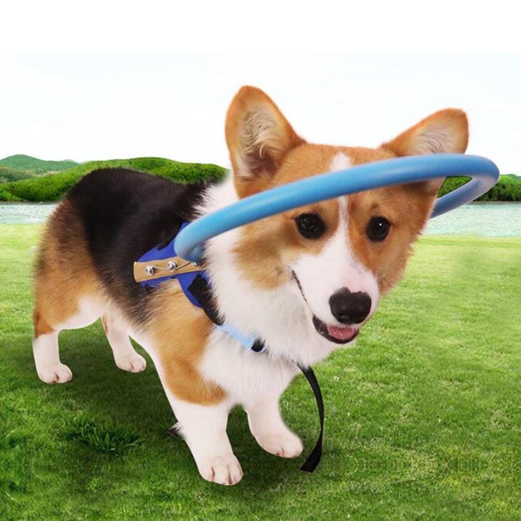Anti-Kollisions-Halo-Ring-fuer-blinden-Hund-im-Freien Indexbild 5