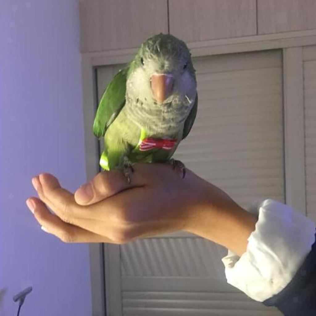 Piumino-di-tessuto-lavabile-pappagallo-fisiologico-pappagallo-pappagallo miniatura 8