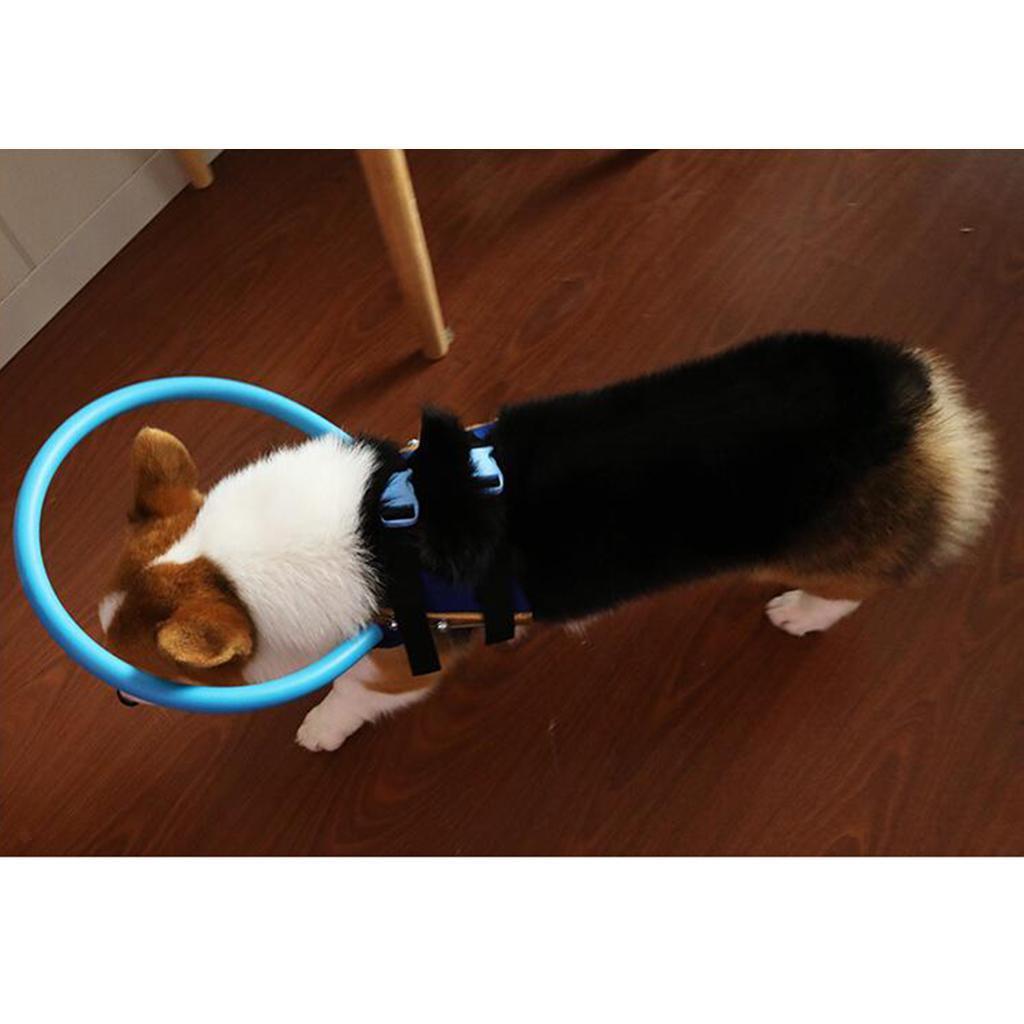 Anti-Kollisions-Halo-Ring-fuer-blinden-Hund-im-Freien Indexbild 8