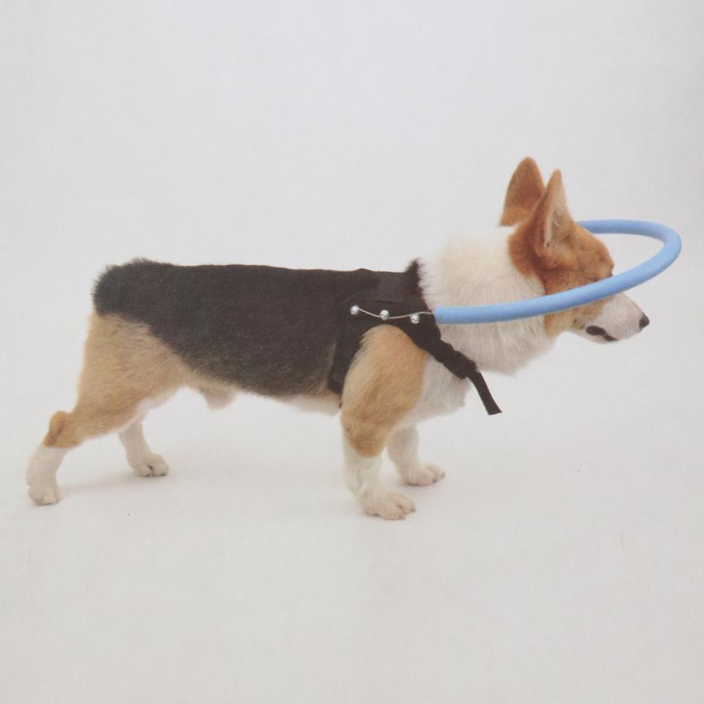 Anti-Kollisions-Halo-Ring-fuer-blinden-Hund-im-Freien Indexbild 11
