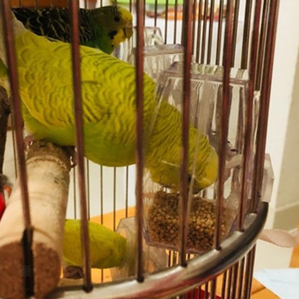 miniatura 9 - Mangiatoia-per-uccelli-che-appende-ciotola-di-cibo-acrilico