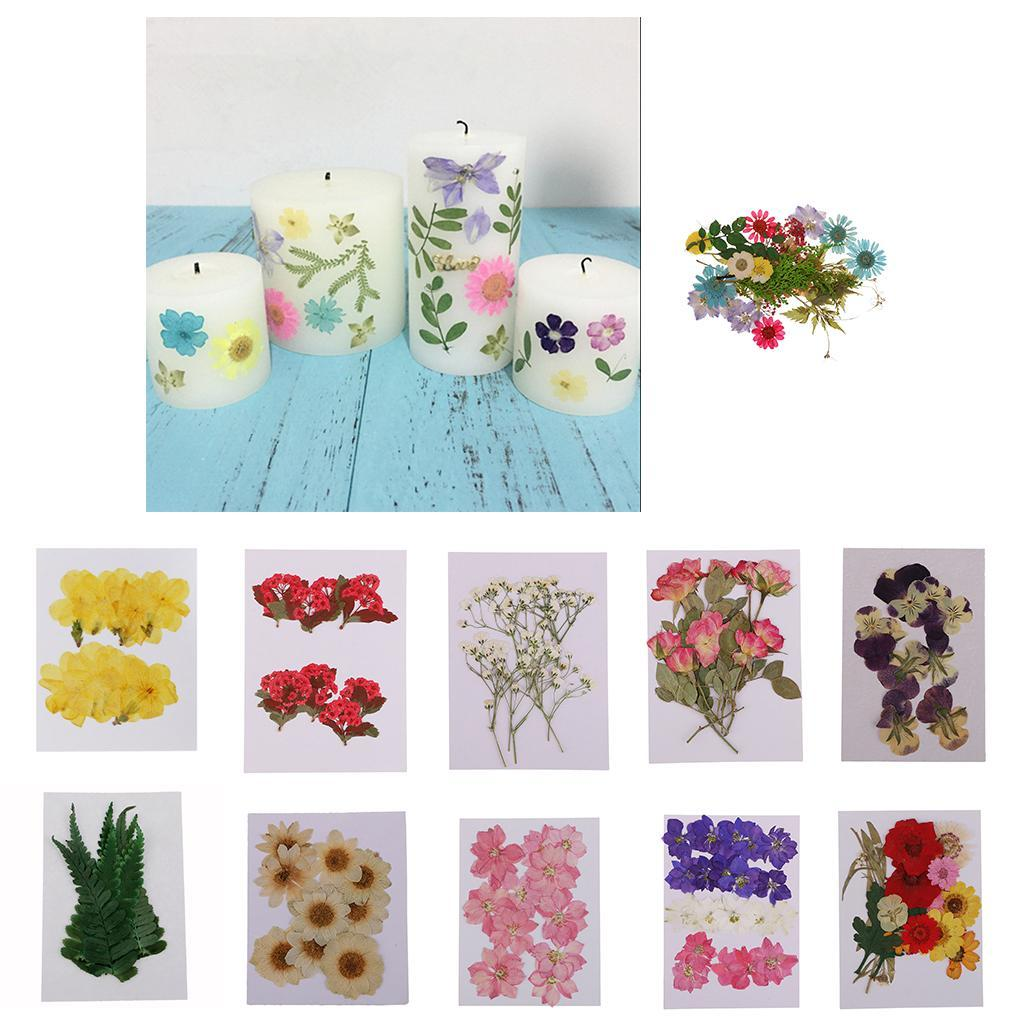 10pcs Pressed Natural Dried Flowers Winter Jasmine for Craft Scrapbooking